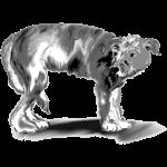 Freigestellter Hund.png