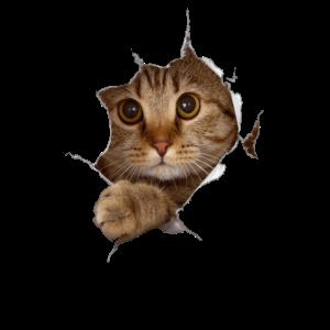 Süßes 3D Kätzchen Katze - Geschenk
