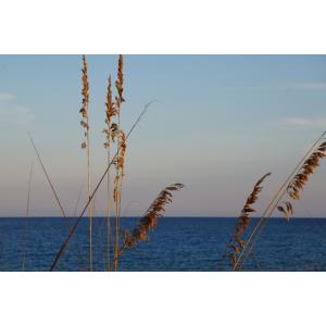Schilf und Meer