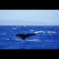 Hawaii Wal