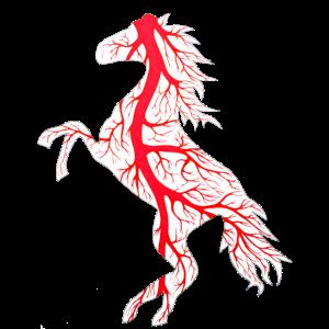 Anpirschendes Pferd-Reitschule-Reitkuh-Junge