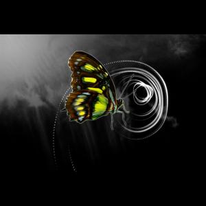 Schmetterlingsspirale natural