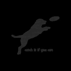 Hundefrisbee Teamsport Mensch Hund