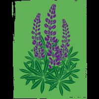 Lupinen violett mit grünem Hintergrund