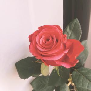 Różżża