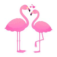 Flamingo Liebespaar