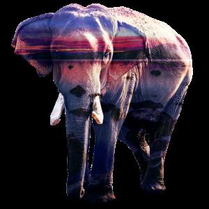Elefant Tier surreal
