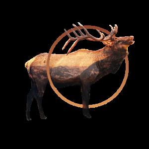 Hirsch Tier surreal