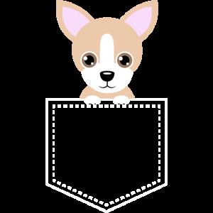 Taschentier Chihuahua