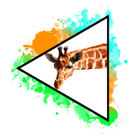 Giraffe naturecontest Natur Nature Tier Animal
