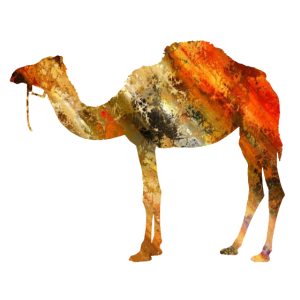 Dromedar, Kamel, Tier