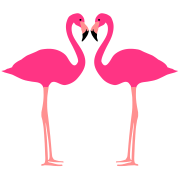 Flamingo, Flamingos, Flamingoes and Heart