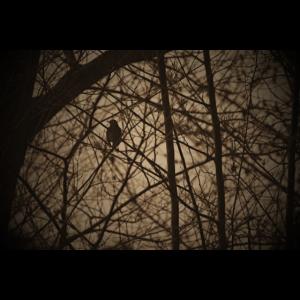 Vogel Silhouette