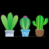 Kaktus!