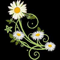 Ranke mit Margerite und Gänseblümchen