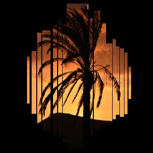 Palme Urlaub Meer Sommer Sonnenuntergang Geschenk