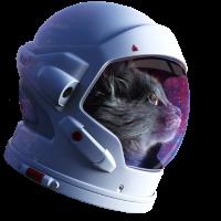 Katze Meow Kitty Astronaut Katzenmutti