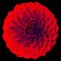 Rote Dahlien / welikeflowers