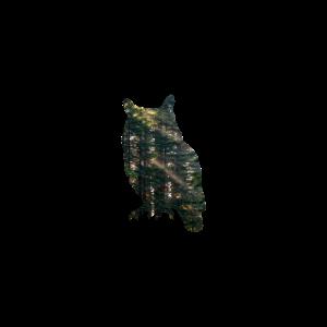 Eule Wald