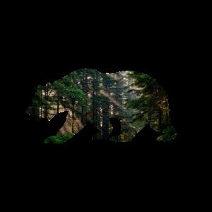 Bär Wald