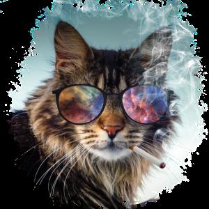 Katze Katzen mit Zigarette und Brille