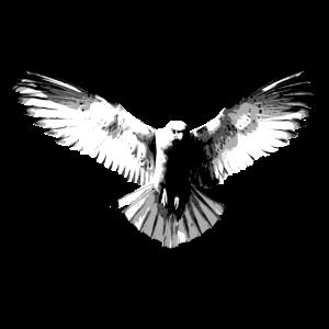 Falke schwarzweiß
