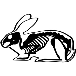 Ray Rammler Hase Kaninchen Häschen Bunny Nager