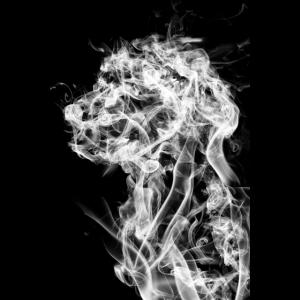 Hund im Rauch