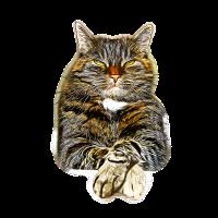 gxp katze cat like a boss vector art
