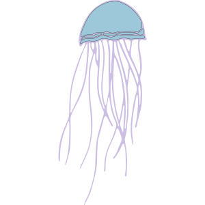Qualle Jellyfish Meeresbewohner