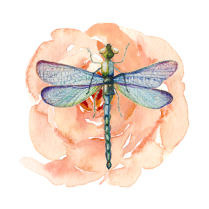 Libelle mit aquarell Blume