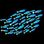 banc de poissons turquoises