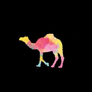 Kamel Dromedar