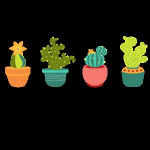 Kakteen Kaktus