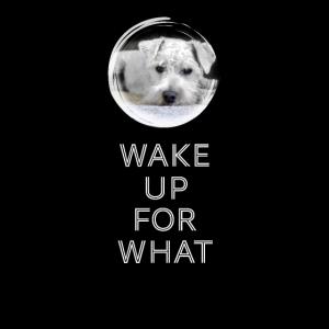 hund langschläfer müde bett schule wake up dog