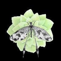 Libelle mit zarter grüner Blume