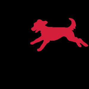 Hund Tierschutz Mischling Tierheim Hunde Retten