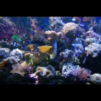 Indonesien unter Wasser