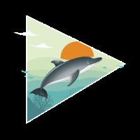 Delfin - Sonnenaufgang - Ozean