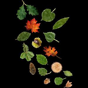 Blätter und Früchte deutscher Waldbäume