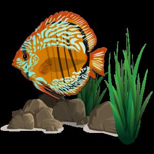 Diskusfisch-Aquarium - Diskusfisch
