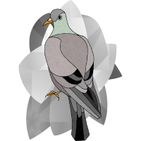 Vogeltaube