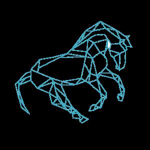 Pferd Polygon reiten sport dressure Fohlen Reiter