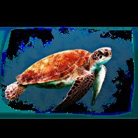 Meeresschildkröte Schildkröte