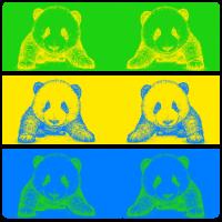 Pandabären in Kontrastfarben