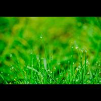 Grüne Wiese mit Morgentau Poster
