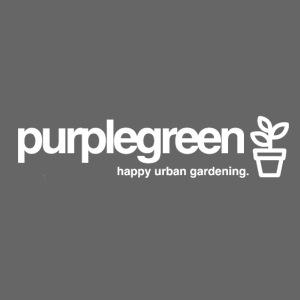 purplegreen classic