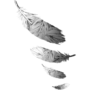 Schwarze und weiße Federn