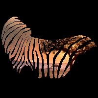 Zebra Traumhafte Safari Geschenk Wüste Afrika