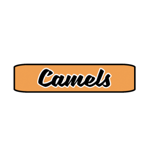 Kamele - Königreich der Tiere